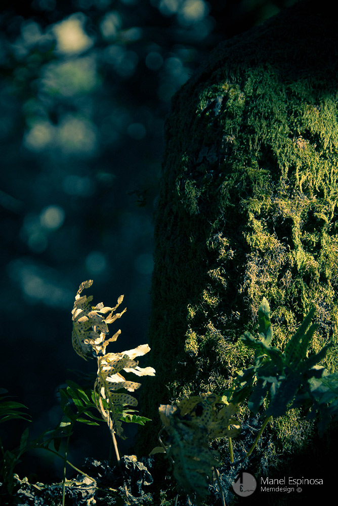 Forest ballerina